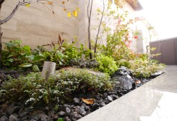 庭 かわいい下草類 岡山