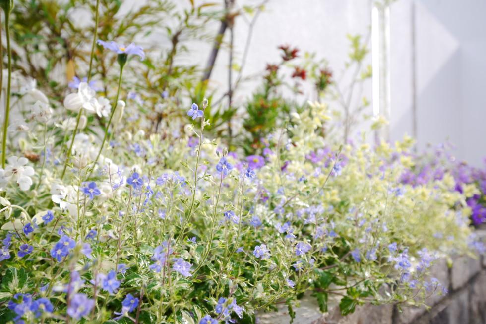 花壇お花かわいい